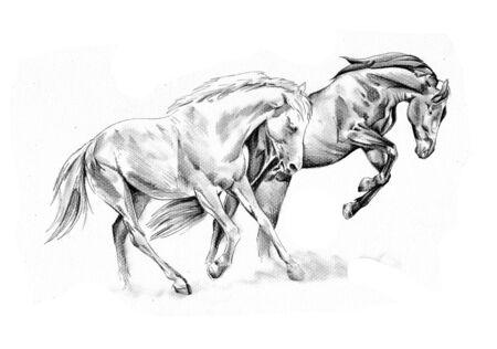 Photo pour Freehand horse head art - image libre de droit