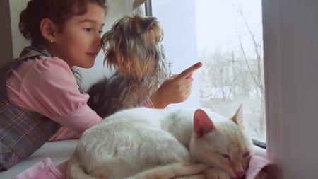 girl teen and pets cat and dog looking out the window, the cat pet sleeps