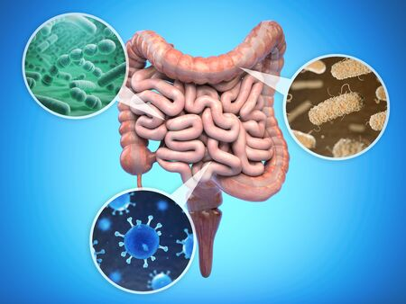 Photo pour Bacteria of human intestine, Intestinal flora gut health concept. - image libre de droit