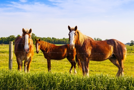 Beautiful Horses Standing In A Field