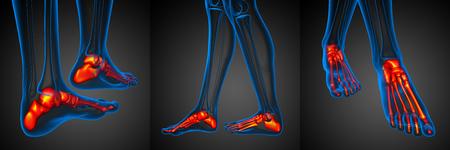 3d rendering illustration of the foot bone