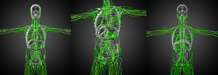 3d rendering medical illustration of the lymphatic system