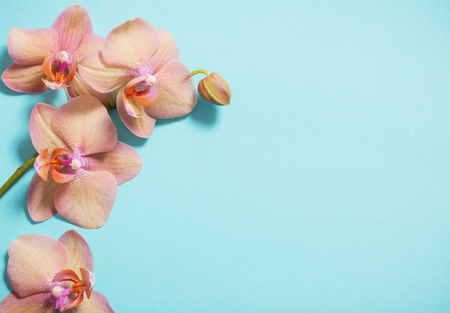 orchids on blue background