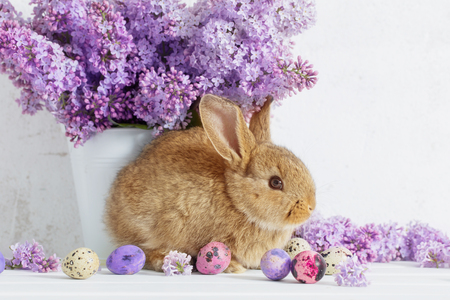 Photo pour Easter rabbit with lilac in vase on white background - image libre de droit