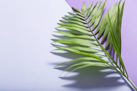 Photo pour palm leaves on violet paper background - image libre de droit