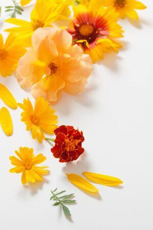 Photo pour the yellow and orange flowers on white background - image libre de droit