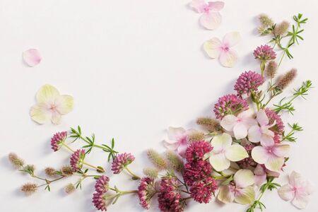 Photo pour beautiful wildflowers on white paper background - image libre de droit