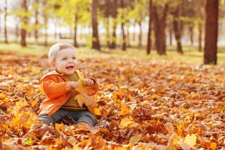 Foto per little baby in sunny autumn park - Immagine Royalty Free