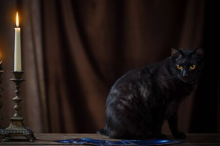 Photo for black cat, fortune-telling cards and burning candles on dark brown background - Royalty Free Image