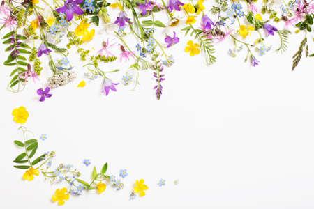 Photo pour beautiful wild flowers on white background - image libre de droit