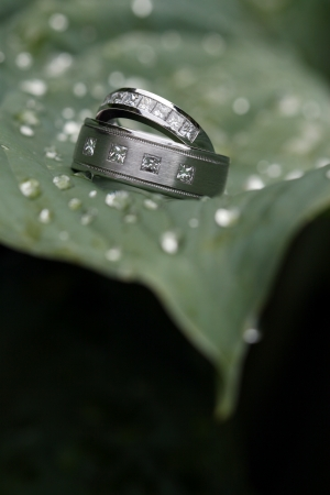 Two wedding rings on a green leaf