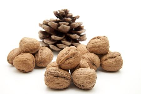 Walnut with pine cone