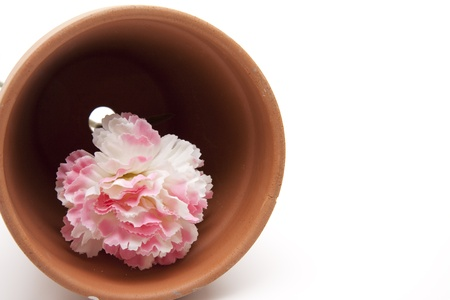 Flowerpot with blossom