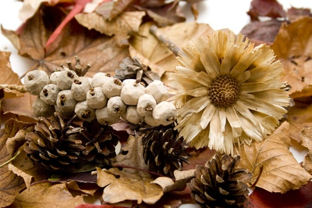 Autumn leaves with dry flower