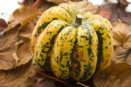 Pumpkin on autumn foliage