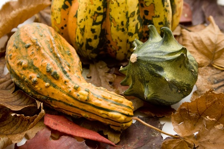 Pumpkin and autumn foliage