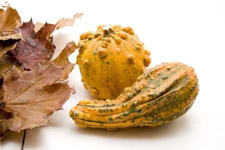 Autumn foliage with pumpkin