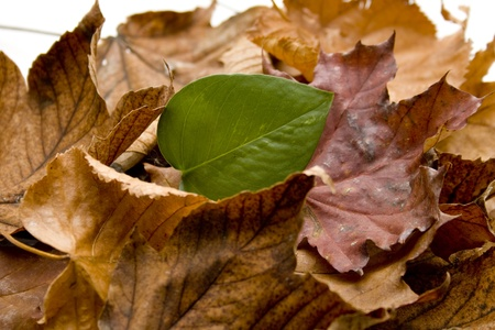 Autumn foliage with plant leaf