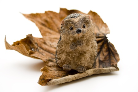 Autumn foliage with hedgehog