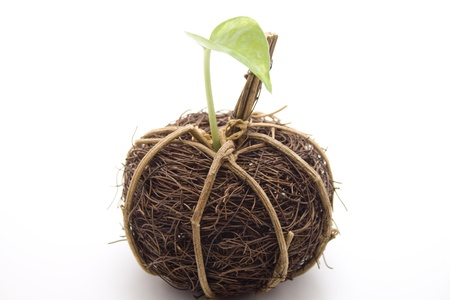 Straw ball with plant leaf