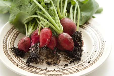 Radishes on porcelain plate