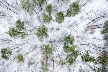 Photo pour Rare snowy pine forest, with dirt roads. Drone view. - image libre de droit