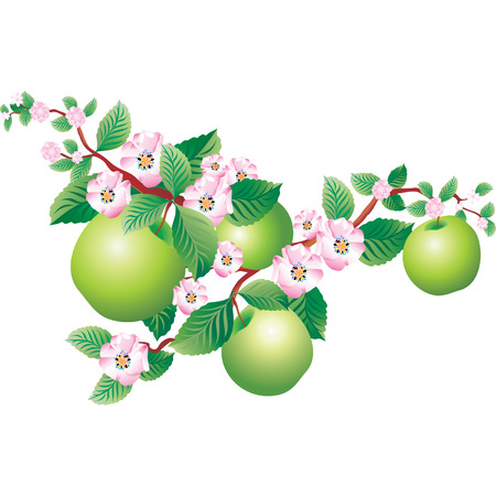 Vector image of a blooming sprig of apple