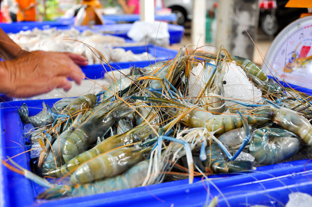 Fresh Giant malaysian prawn are on sale in the bazaar.