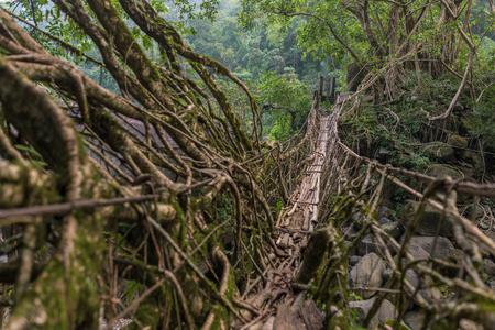 Foto für Living roots bridge near Nongriat village, Cherrapunjee, Meghalaya, India. This bridge is formed by training tree roots over years to knit together. - Lizenzfreies Bild