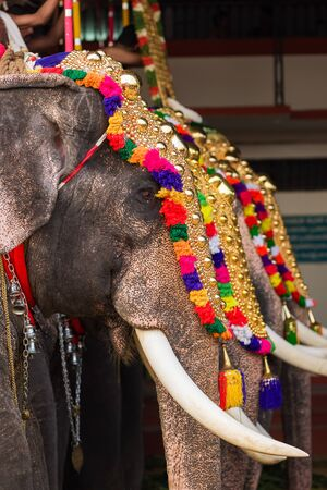 Photo pour Decorated elephants at temple festival in Siva temple, Ernakulam, Kerala, India - image libre de droit