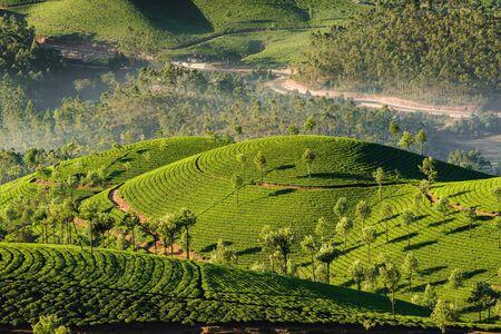Photo pour Tea plantations in Munnar at early morning in Kerala, India - image libre de droit