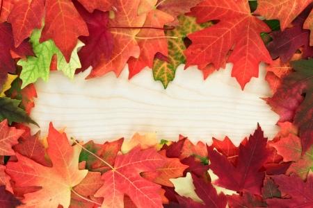 Photo pour fall leafs on wooden board - image libre de droit