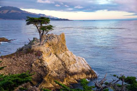 Lone Cypress Tree, California coast