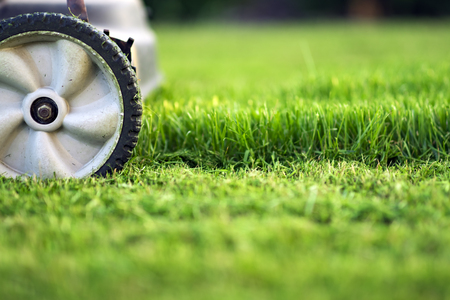 Foto per Lawn mower cutting green grass - Immagine Royalty Free