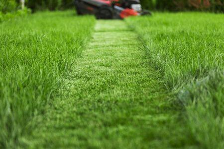Foto de Lawn mower cutting tall green grass in backyard - Imagen libre de derechos