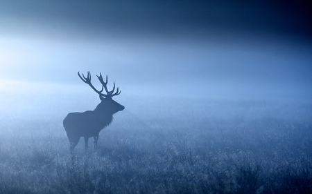 Photo pour Red deer stag silhouette in autumn mist - image libre de droit