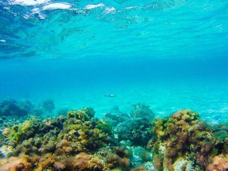 Photo pour Colorful underwater vegetation in the Mediterranean sea - image libre de droit