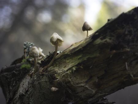 Little mushrooms growing on a rotten tree trunk