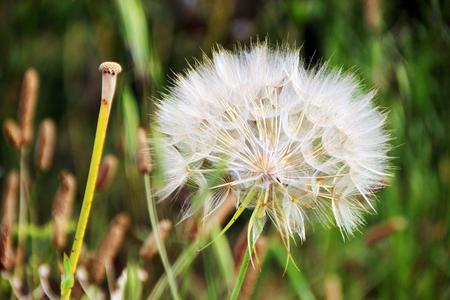 Beautiful flower of summer, France