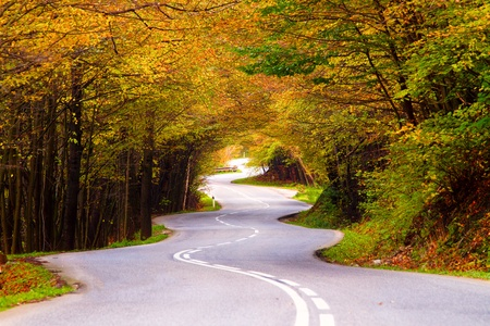 Winding road during the autumn season