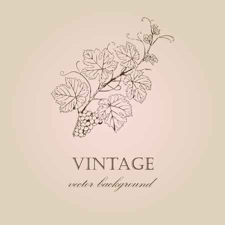 Vintage background with grape branch