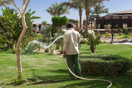 Gardener watering hose green lawn in the hotel in Egypt