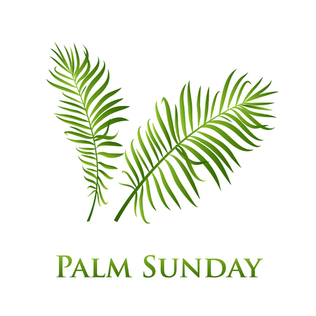 Illustration pour Palm leafs vector icon. Vector illustration  for the Christian holiday Palm Sunday - image libre de droit