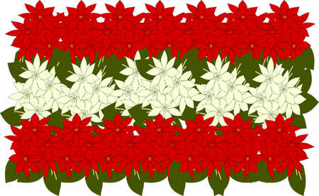 Red and white poinsettia herds