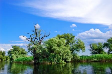 A watter channel bank in the Danube Delta