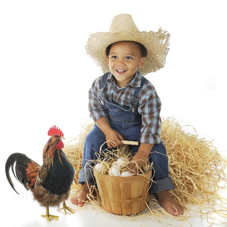 A delighted preschool farm boy sitting on a hay stack with a basketful of eggs, a rooster standing nearby   On a white background