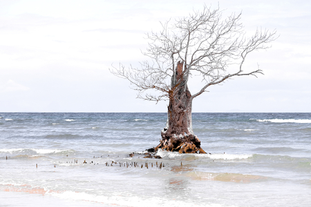 Where mangrove forests once grew, there is only one last tree that has escaped deforestation