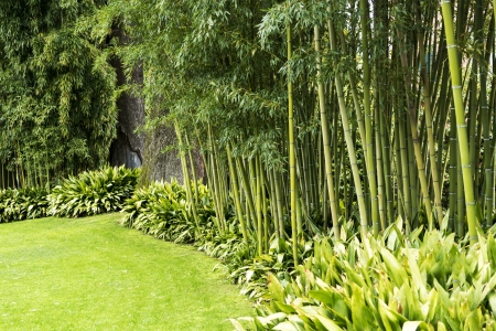 Garden decorated with bamboo
