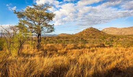 African Landscape in Kruger National Park, South Africa
