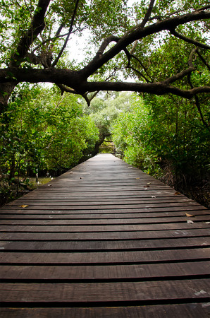 Path in Mangrove forest